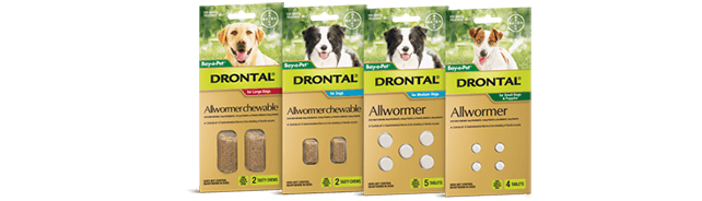 Drontal® for dogs