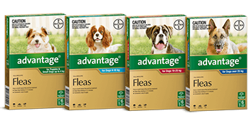 advantage homepage dog