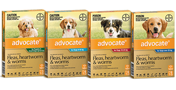 Packaging of the different sizes of Advocate for dogs