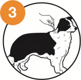 Graphic showing where to apply the whole tube of Advocate on dogs of certain sizes