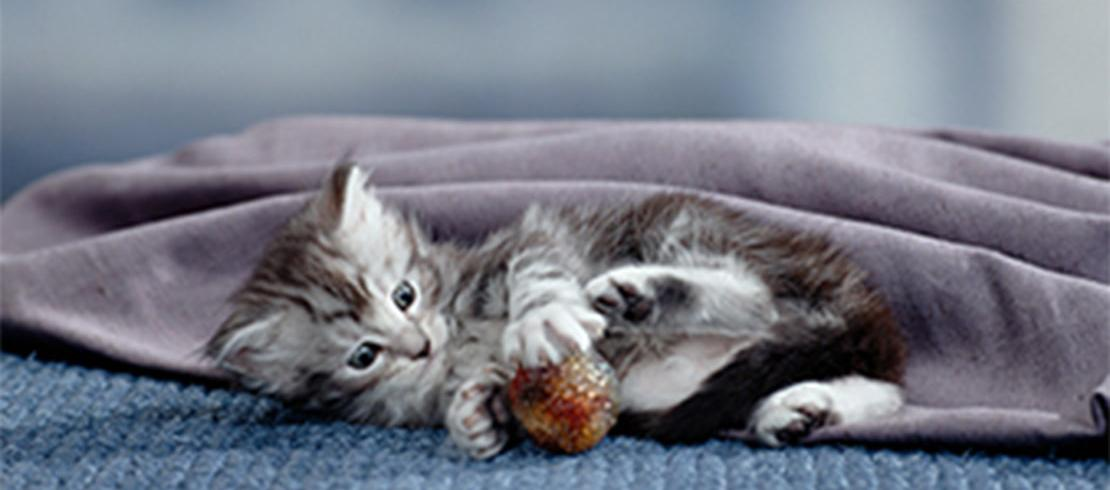 Behaviour, socialisation, & training tips for kittens