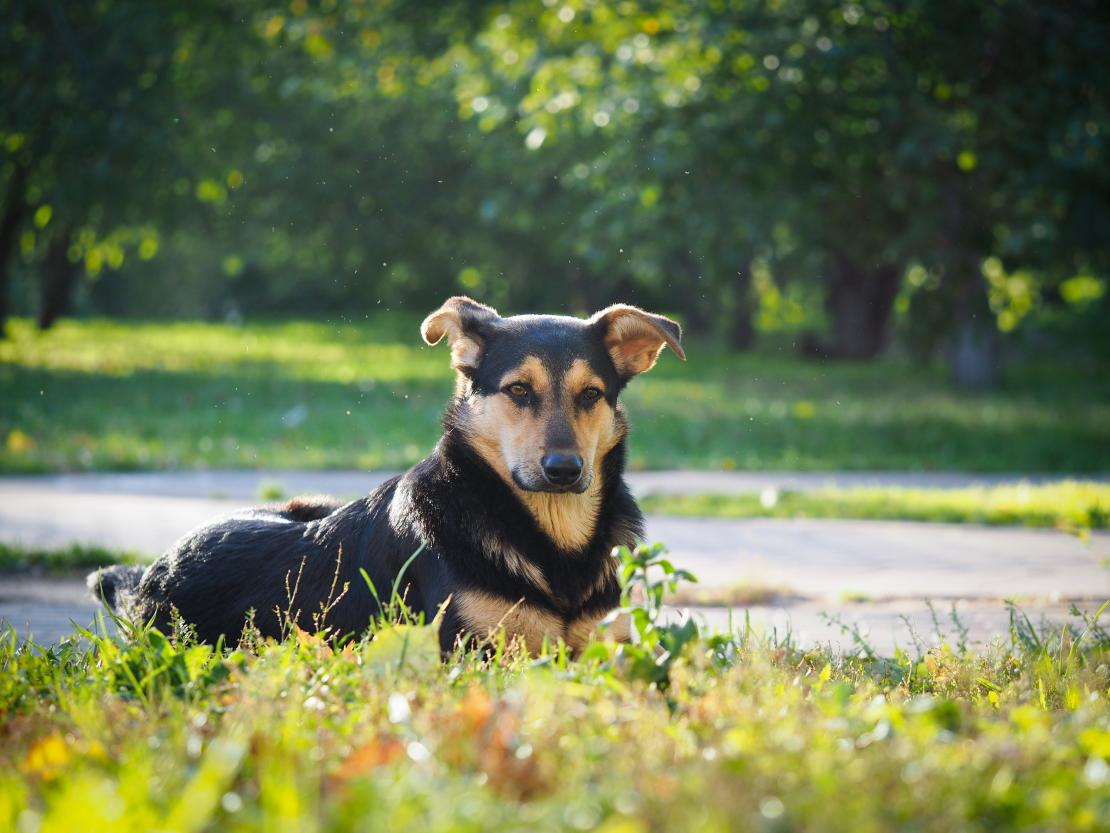 Dogs And Mosquitoes 5 Ways To Protect Your Dog