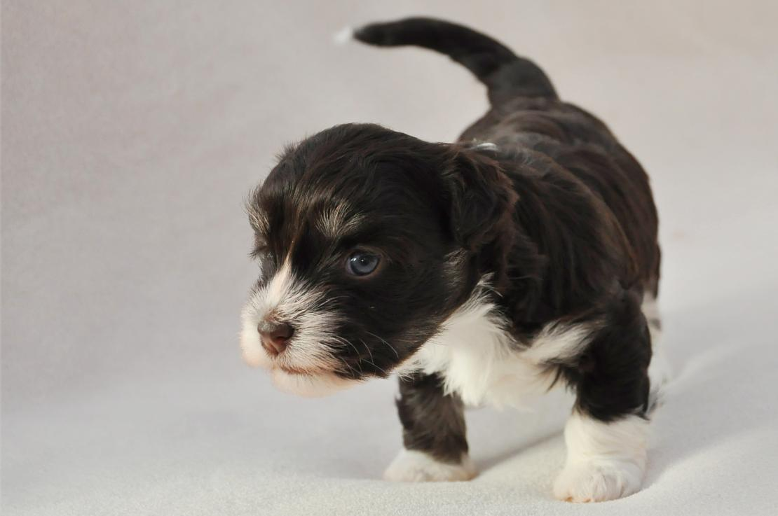 A Week By Week Look At The Stages Of Puppy Development