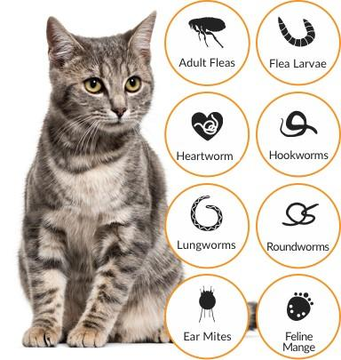 An image showing that Advocate for cats provides fast relief from the different fleas and worms