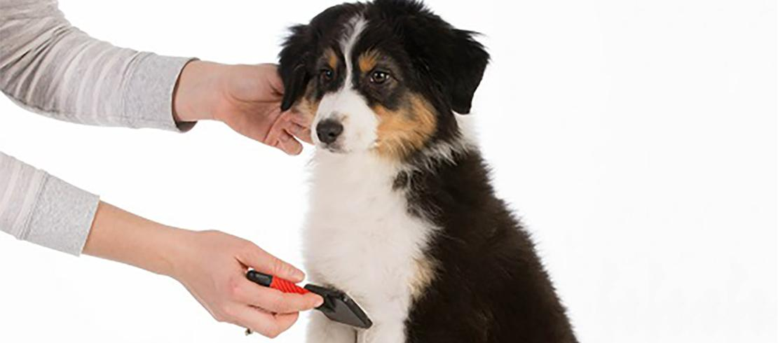 person brushing puppy's coat