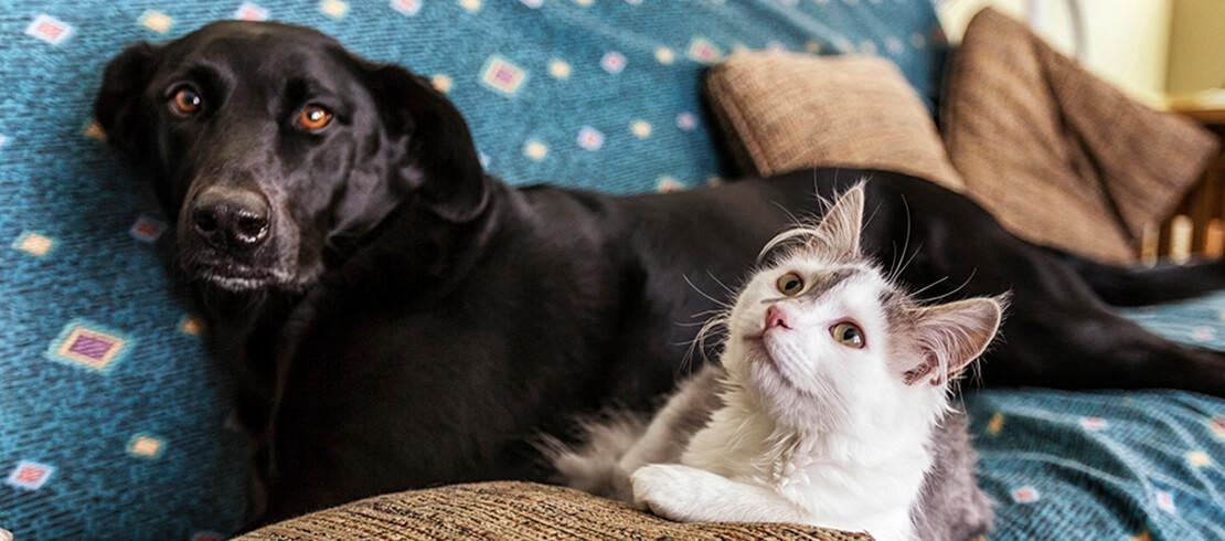 A dog and cat resting on the couch