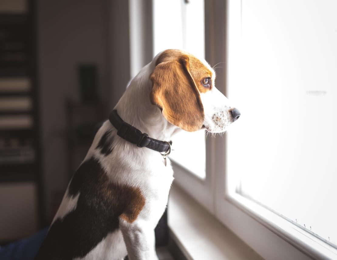 A dog looking out the window and missing his owner