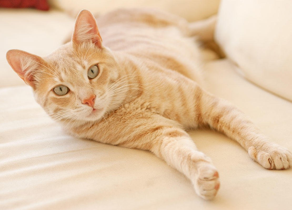 Desexing Your Cat | FAQs on Spaying & Neutering