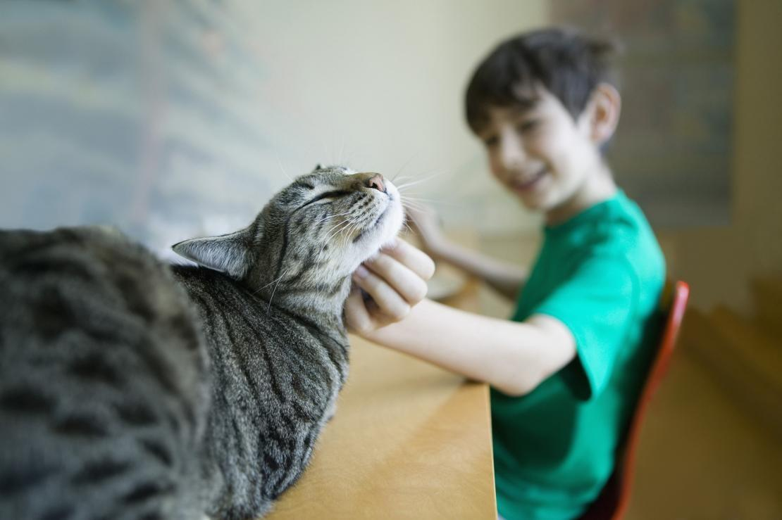 A boy scratching a happy cat under the chin