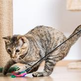 Two cats exercising and playing with cat toys