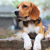 a beagle dog and cat sitting side by side in the yard