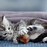 A kitten laying on a blanket and playing with a ball