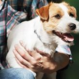 terrier held by owner in flannel