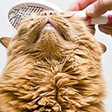 A cat being brushed on the head