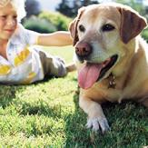 A boy petting a labrador retriever laying in grass