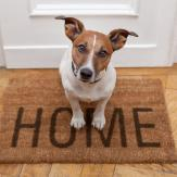 "A dog sitting on a door mat that says ""home"""