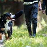 Fun Dog Exercise Ideas to Try Out