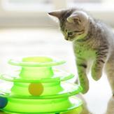 kitten enjoying playtime