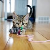 A kitten playing with a cat toy on a string