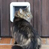 A cat cautiously waiting to go through a cat flap