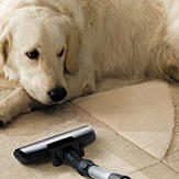 Dog watching owner vaccuum floor