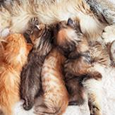 happy mother cat with her kittens