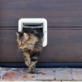A Norwegian Forest Cat passes through a cat flap