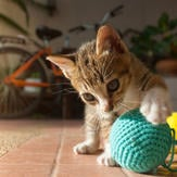 Kitten playing with blue ball of yarn