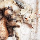 Happy cat with kittens