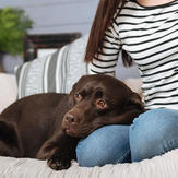 your dog may be showing signs of a fever which could indicate a tick bite